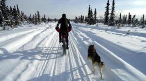Bike shop owner Kevin Breitenbach rides a fat bike in the White Mountains National Recreation Area in Alaska in March.[npr.org / Josh Spice]